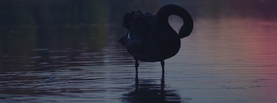 How to Apply The Black Swan Theory to Your Content Marketing Plan